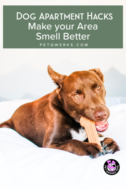 Dog Apartment Hacks: Make your Area Smell Better | Dog ...