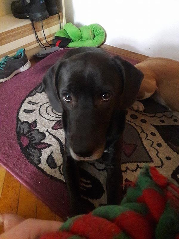 Louis Hunde Tiere Und Mischling