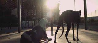 """""""O GRITO DO BICHO"""": Vídeo-clip sobre abandono e adoção de cães"""