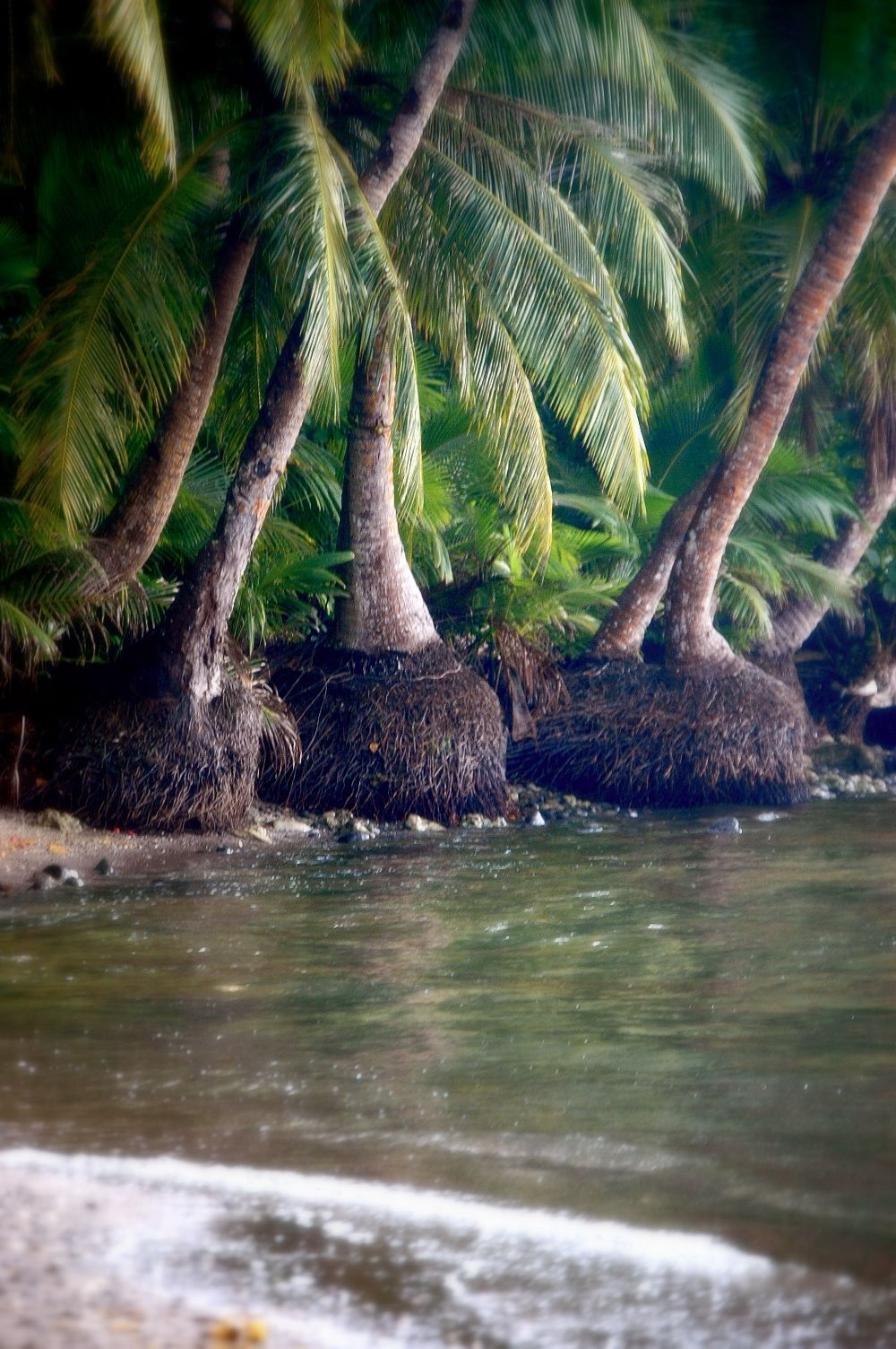 Coconut Lined Beach at Cetti Bay Guam.