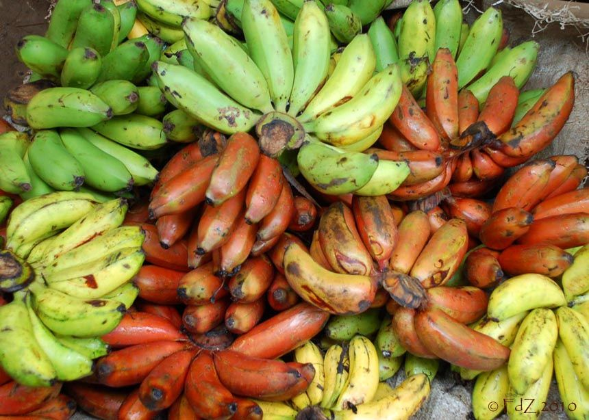Types Of Bananas Pictures