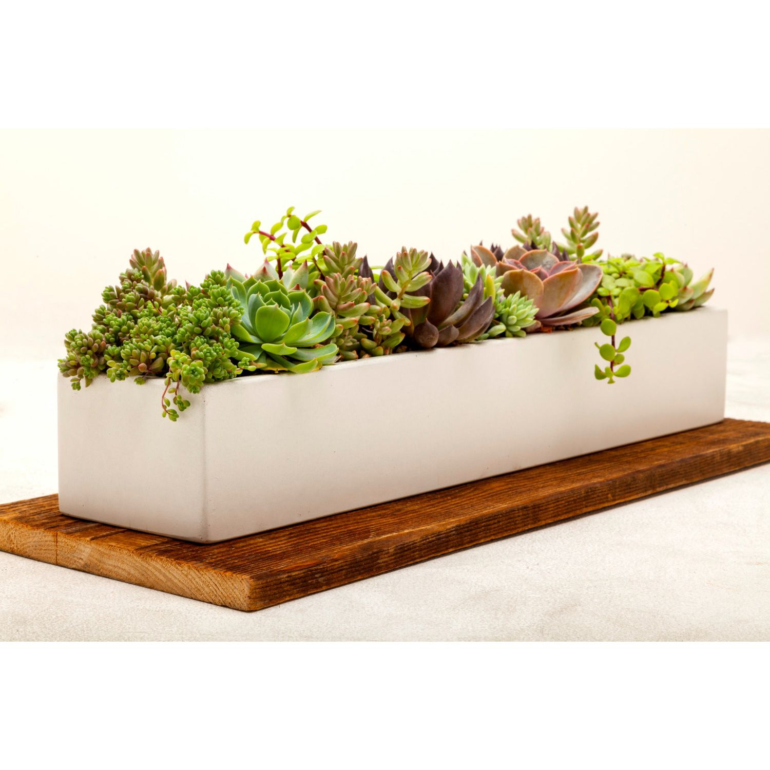Low Rectangle Concrete Planter In White 24 Shopping