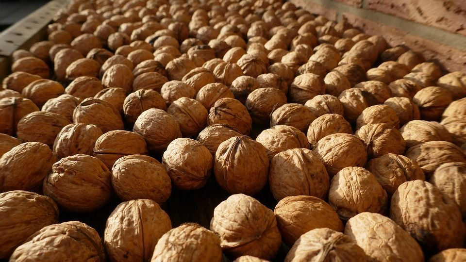 Free Photo Nuts Harvest Food Walnuts Healthy Nutrition - Max Pixel #walnutsnutrition Free photo Nuts Harvest Food Walnuts Healthy  - Max Pixel  nutrition walnuts - Nutrition #Pixel #Nuts #Nutrition #eggnutritionfacts Free Photo Nuts Harvest Food Walnuts Healthy Nutrition - Max Pixel #walnutsnutrition Free photo Nuts Harvest Food Walnuts Healthy  - Max Pixel  nutrition walnuts - Nutrition #Pixel #Nuts #Nutrition #walnutsnutrition Free Photo Nuts Harvest Food Walnuts Healthy Nutrition - Max Pixel #walnutsnutrition