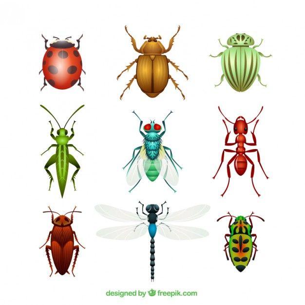 Variedad de insectos Vector Gratis | ceramica | Pinterest | Insectos ...