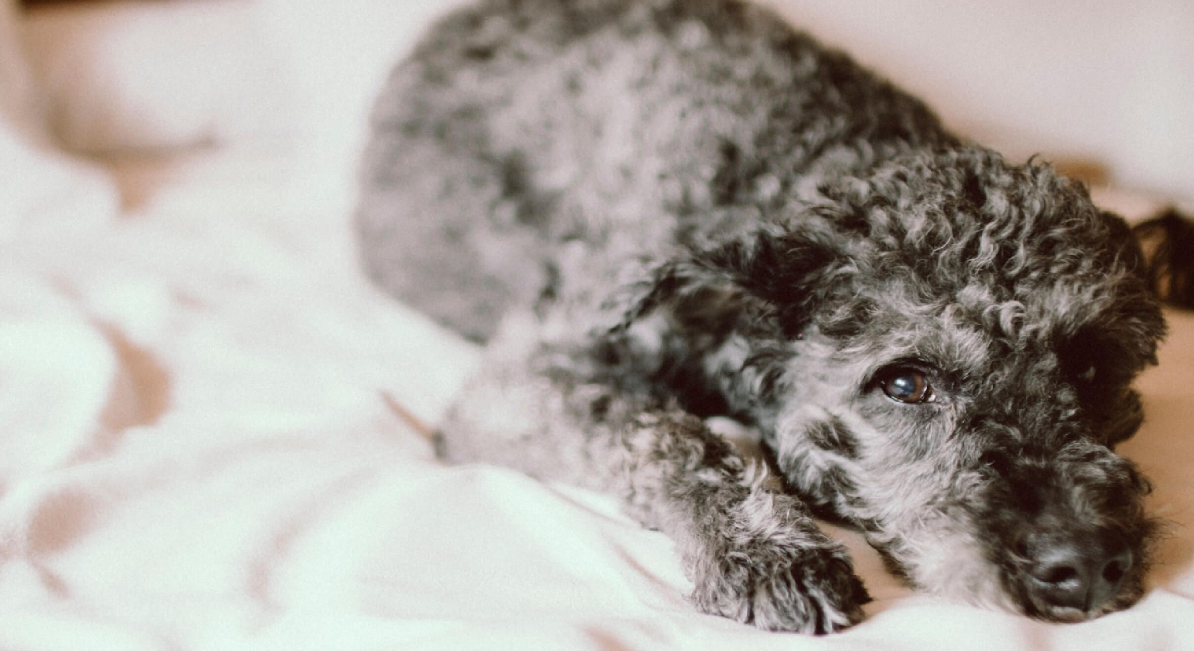 12 PetFriendly Hotel Chains Training your dog, Sleeping