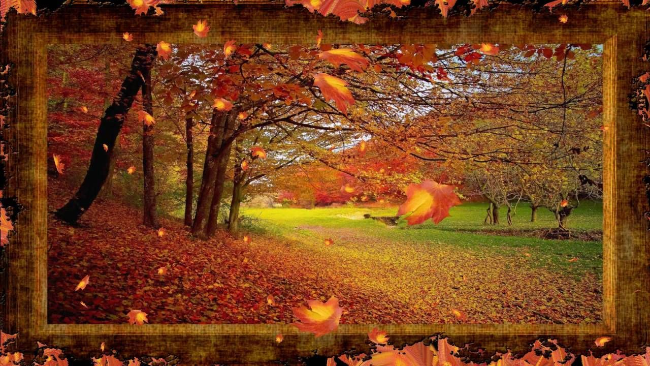 Autumn Leaves Falling #autumnleavesfalling Autumn Leaves Falling #autumnleavesfalling