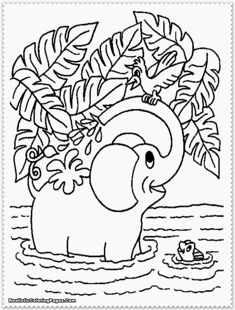 realistic jungle animal coloring pages ayk world pinterest animal
