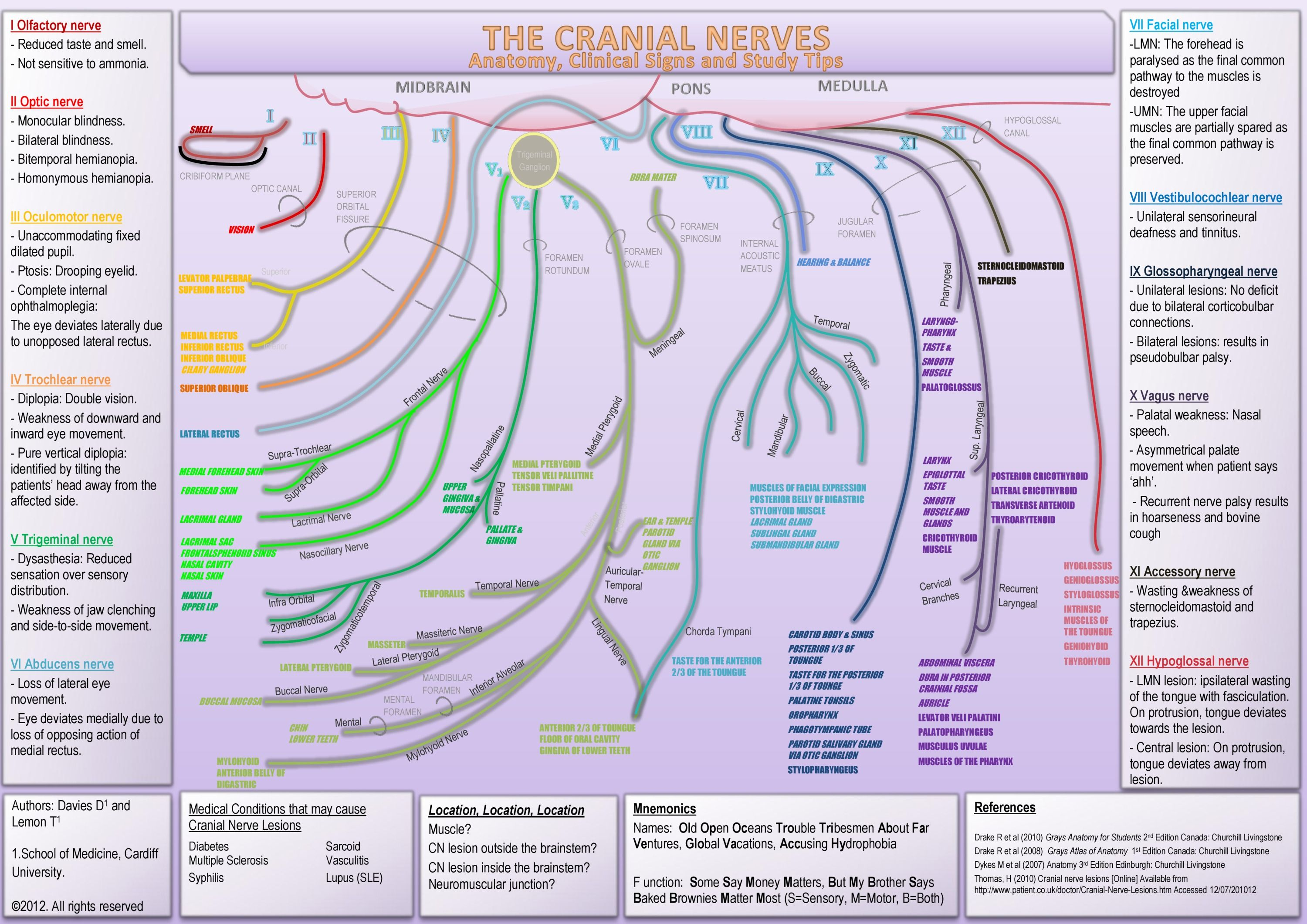 Cranial Nerves - Anatomy, Clinical Signs and Study Tips | school ...