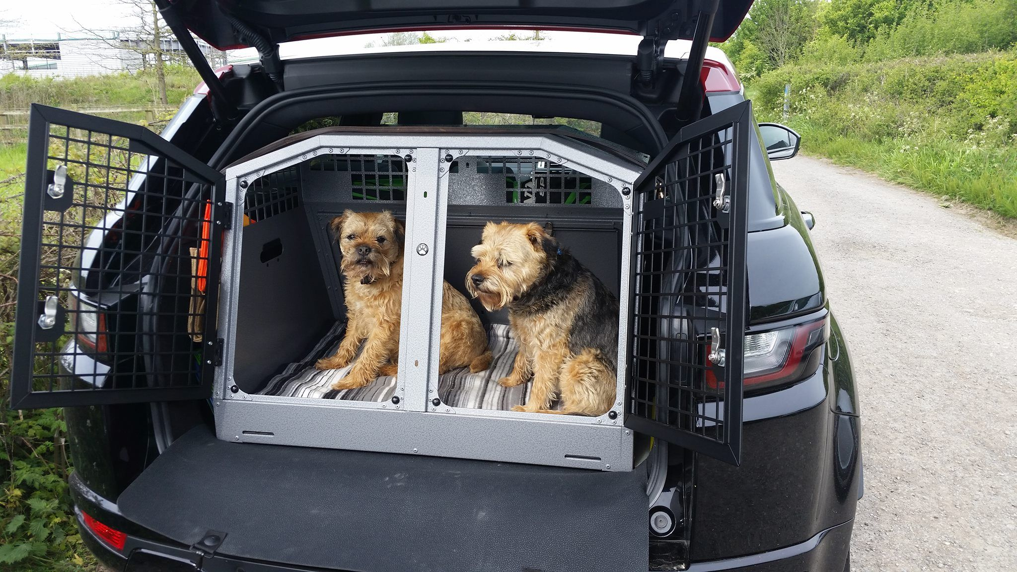Dog Safety B25 Border Terriers Named Archie And Aubrey In A