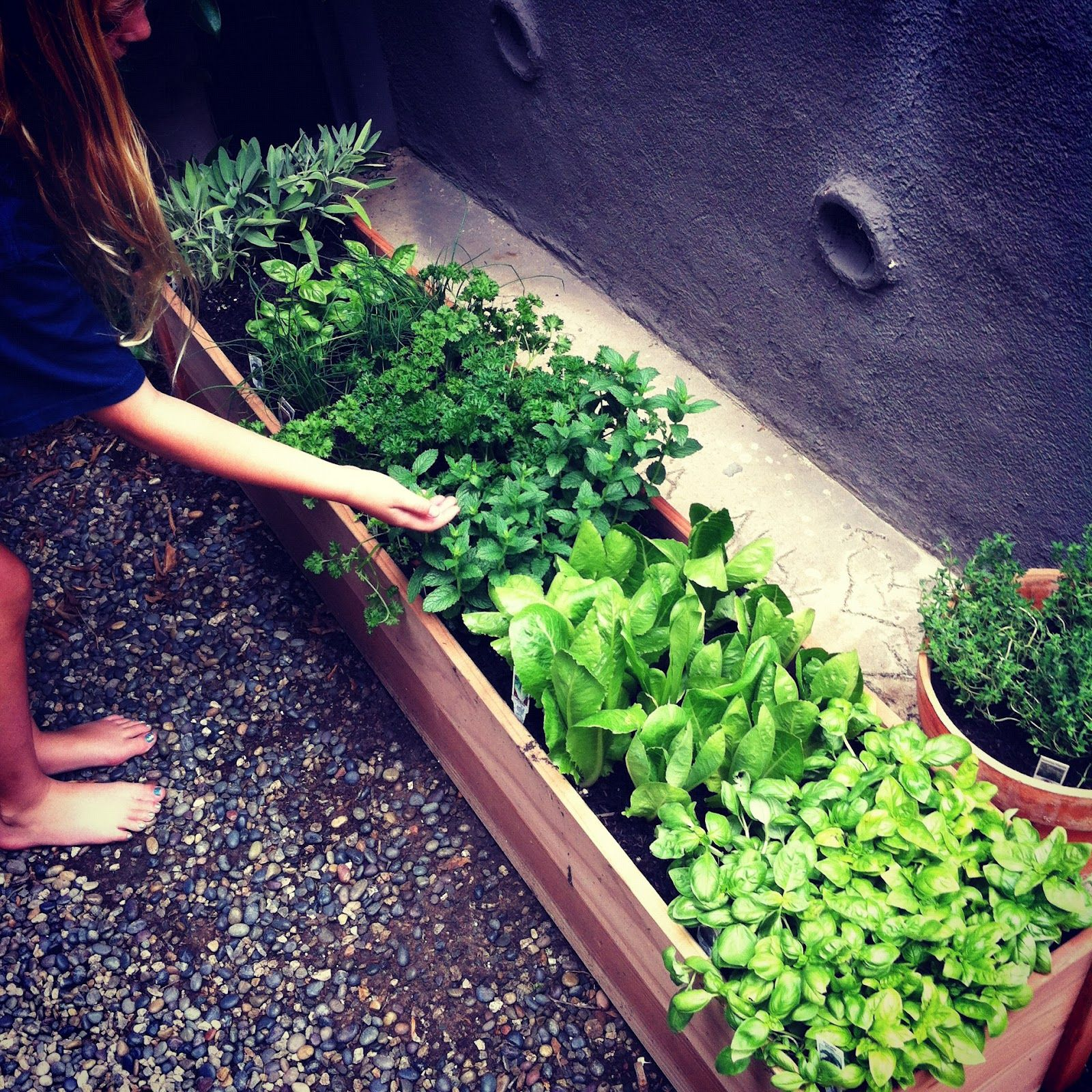 Long Thin Planters: Long Narrow Timber Planter For Herbs.