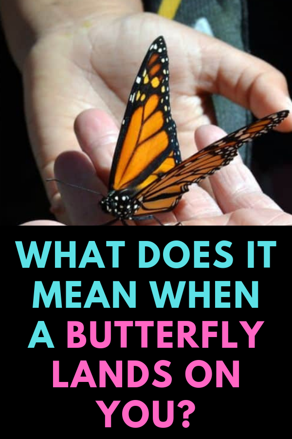 Spiritual Meaning of Butterfly Landing On You + Dream Interpretation