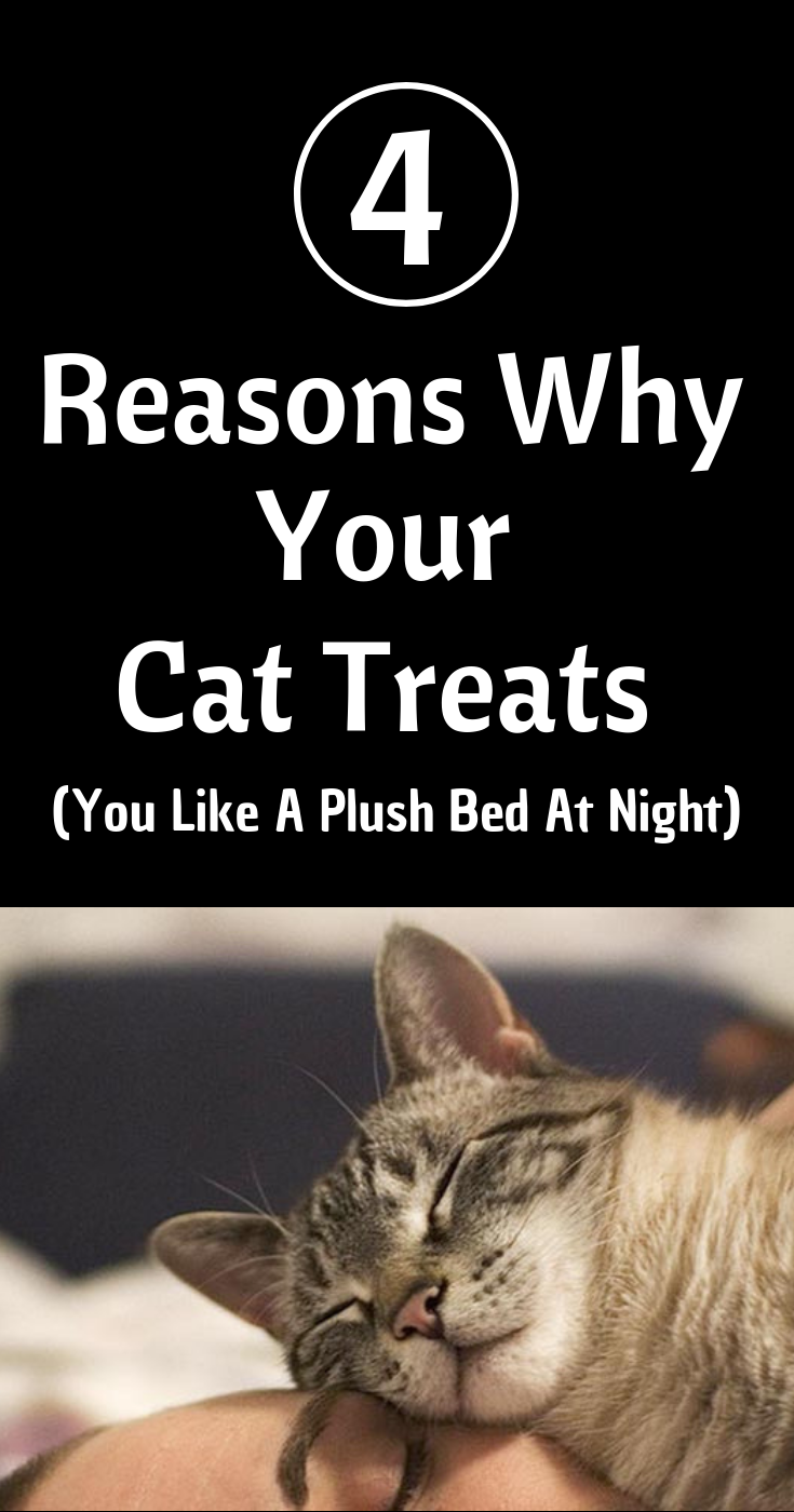 4 Reasons Why Your Cat Treats You Like A Plush Bed At Night Cat Facts Cat Sleeping Cats
