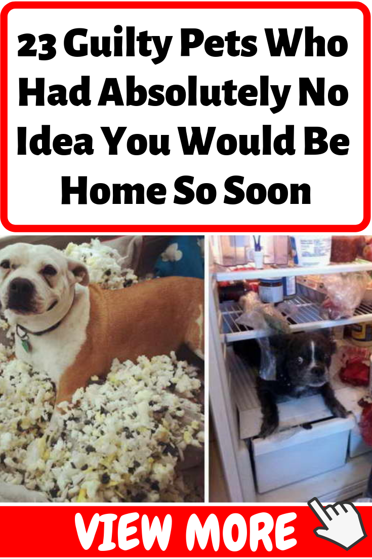 23 Guilty Pets Who Had Absolutely No Idea You Would Be Home So Soon Pets Pet Animals Dogs Dog Puppies Dog Shaming Pet Station Pets