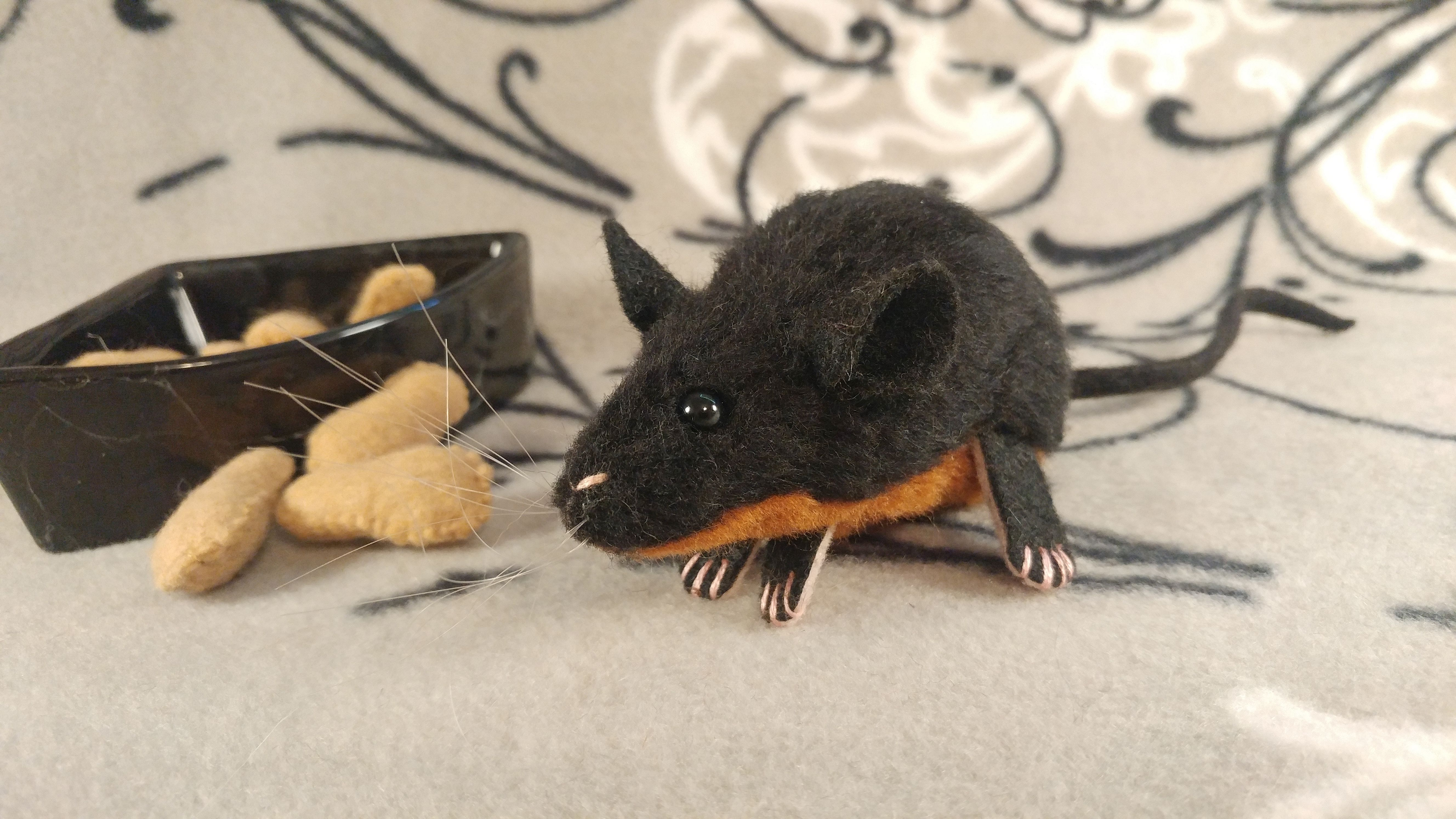 Black Mouse With Ginger Belly Mouse Belly Ginger