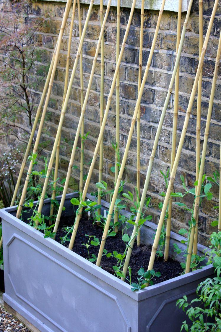 Mutable A Trough Garden Pinterest Garden Veggie Garden Plants That Are Veggie Garden Planting Chart Peas A Balcony Gardeninggarden Plantersvegetable Peas