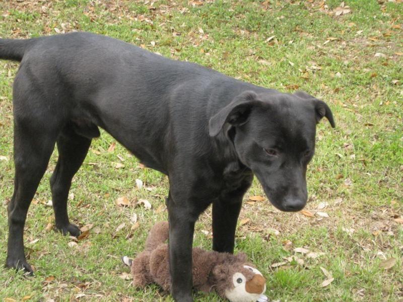 Adopt Jack On Dog Adoption Animals Shelter Dogs
