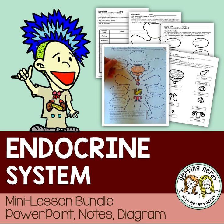 Endocrine System - Distance Learning | Endocrine system ...
