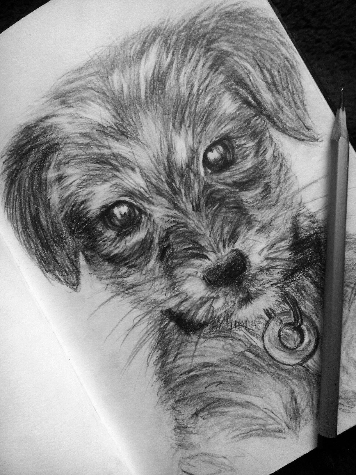 Dog Simple Pencil Drawing