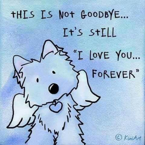 Crying. I miss my puppy. RIP Annie. … Pet loss grief