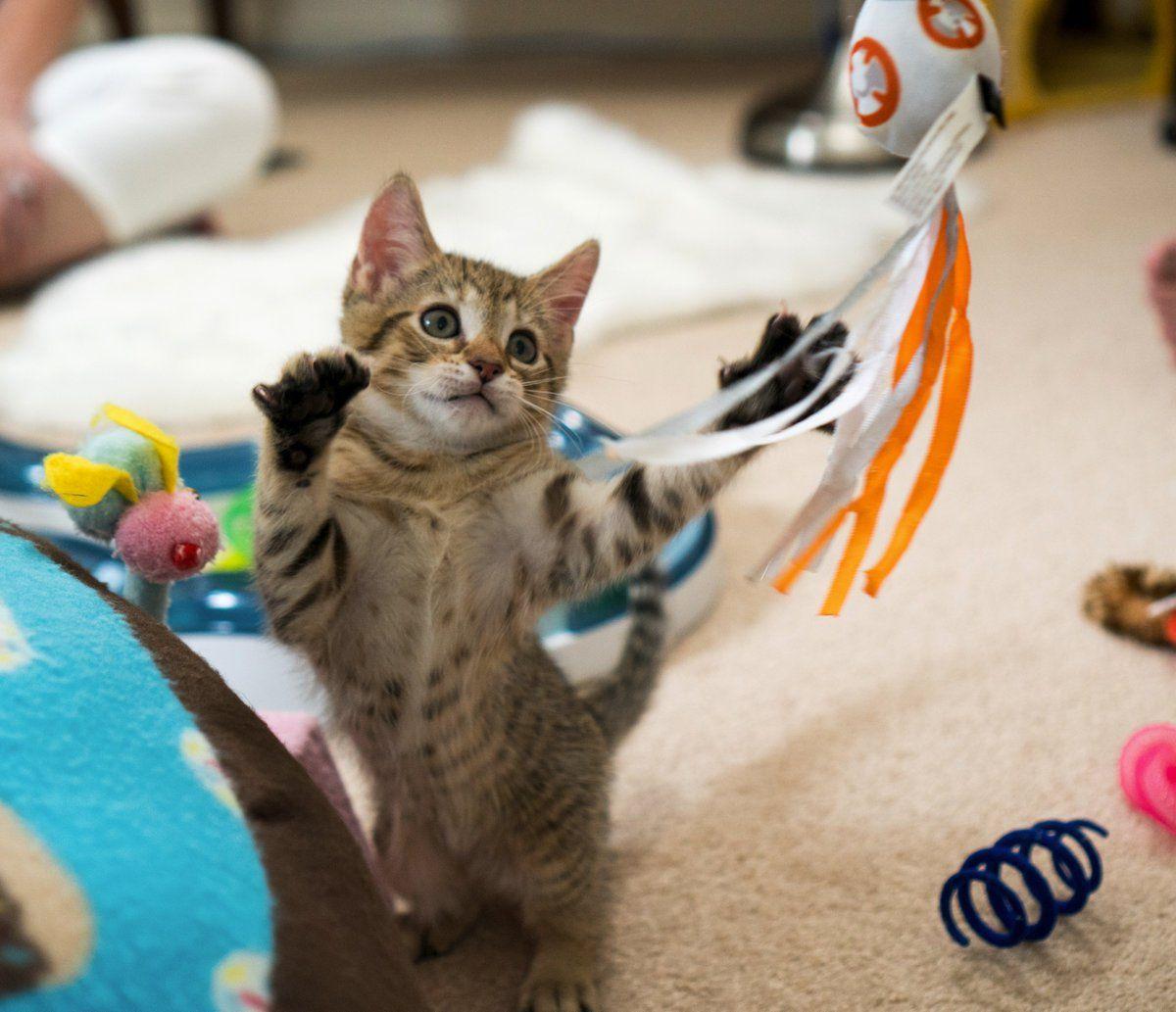 Kitten Academy On Twitter Kitten Pets Cro