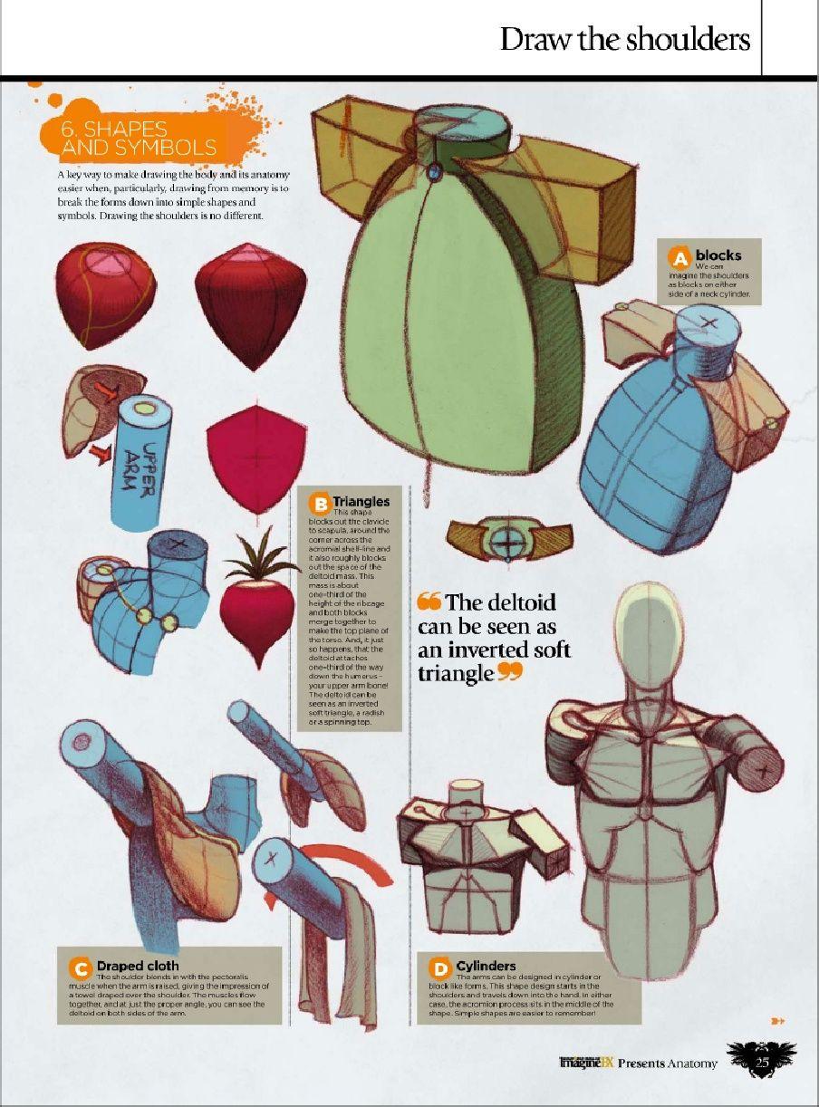 Ron Lemen Anatomy! | Study | Pinterest | Anatomy, Anatomy reference ...