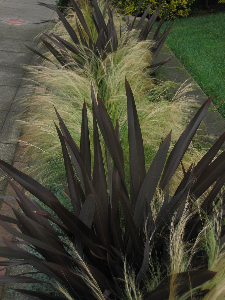 Car park area phormium lets put in swathes with stipa for Dark ornamental grasses