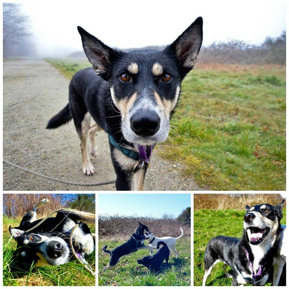 Retired sled dog Zag has been in our care since July, and