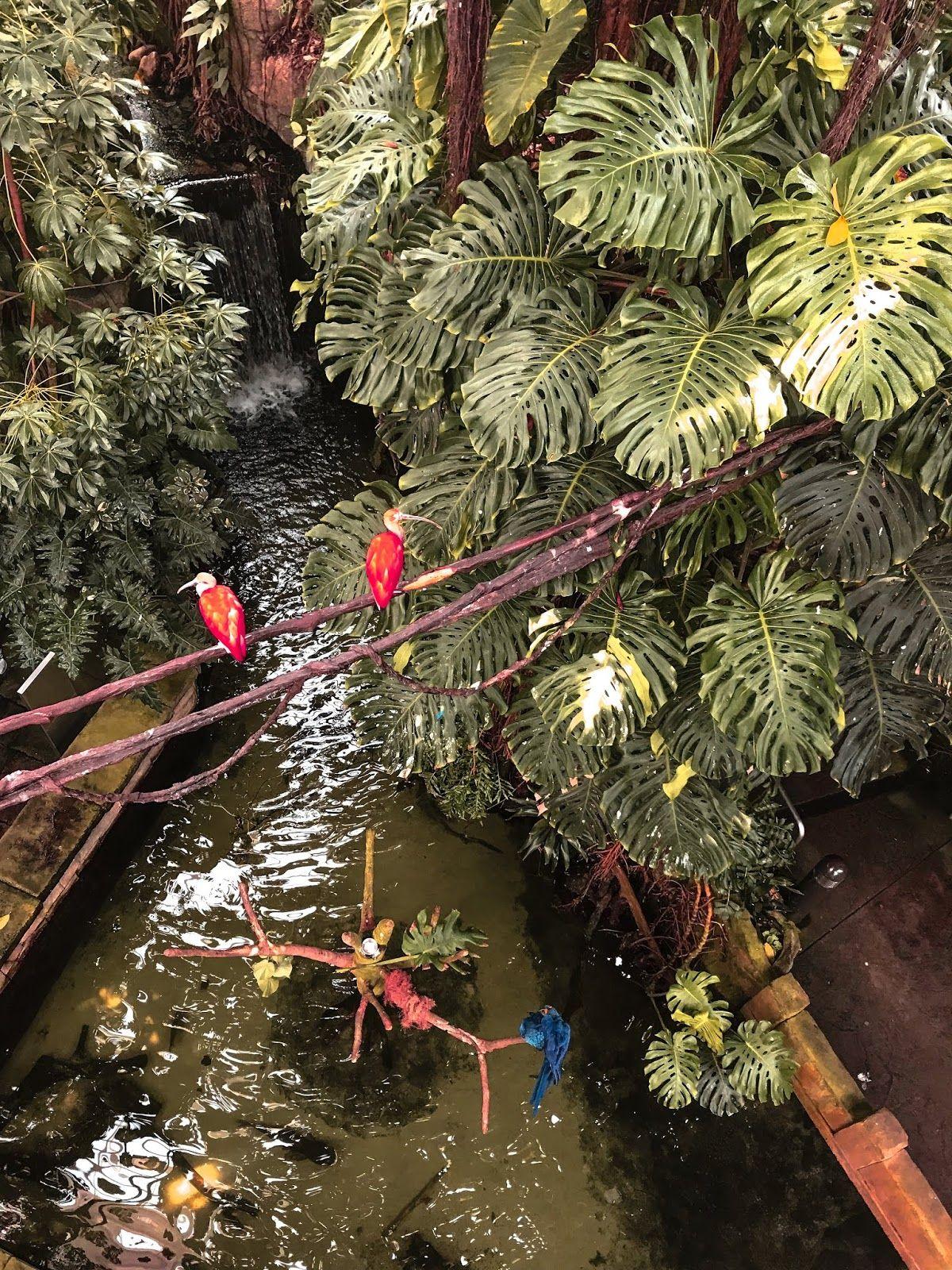 f7f2e1a51ca0557821c83773db68cea2 - Moody Gardens Spring Break In Texas