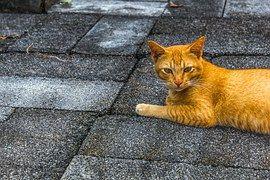 Kissa, Pet, Pienet Eläimet, Eläin