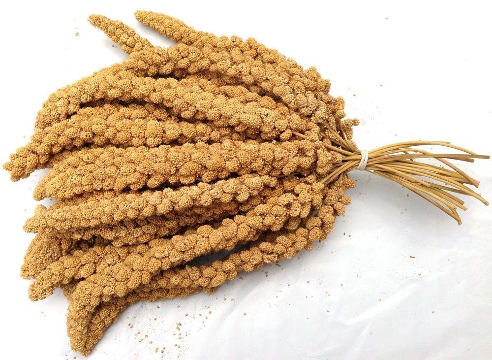 Higgins Millet Spray For Birds Food Bird Food Treat Recipe