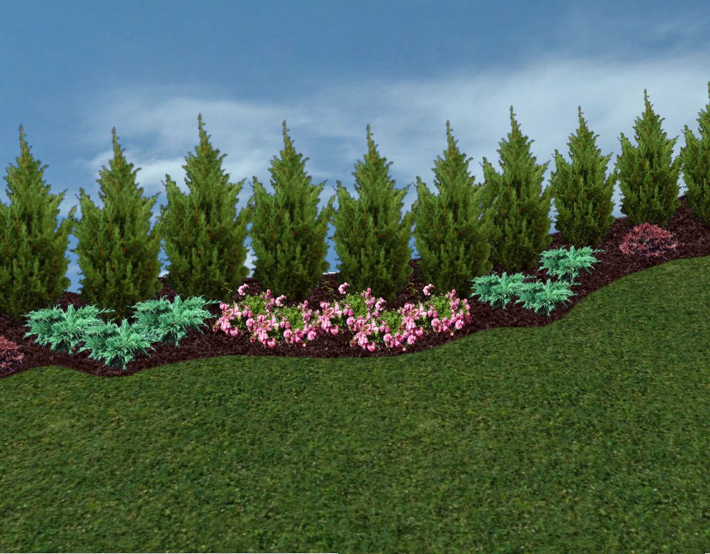 privacy trees and hedges in the landscape the planting tree