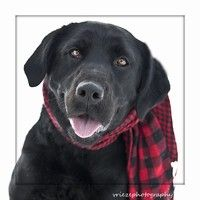 Sylvia Is An Energetic 11 Month Old Black Lab Available For Adoption At Animal Allies In Duluth Dog Sounds Animals Black Labrador Retriever