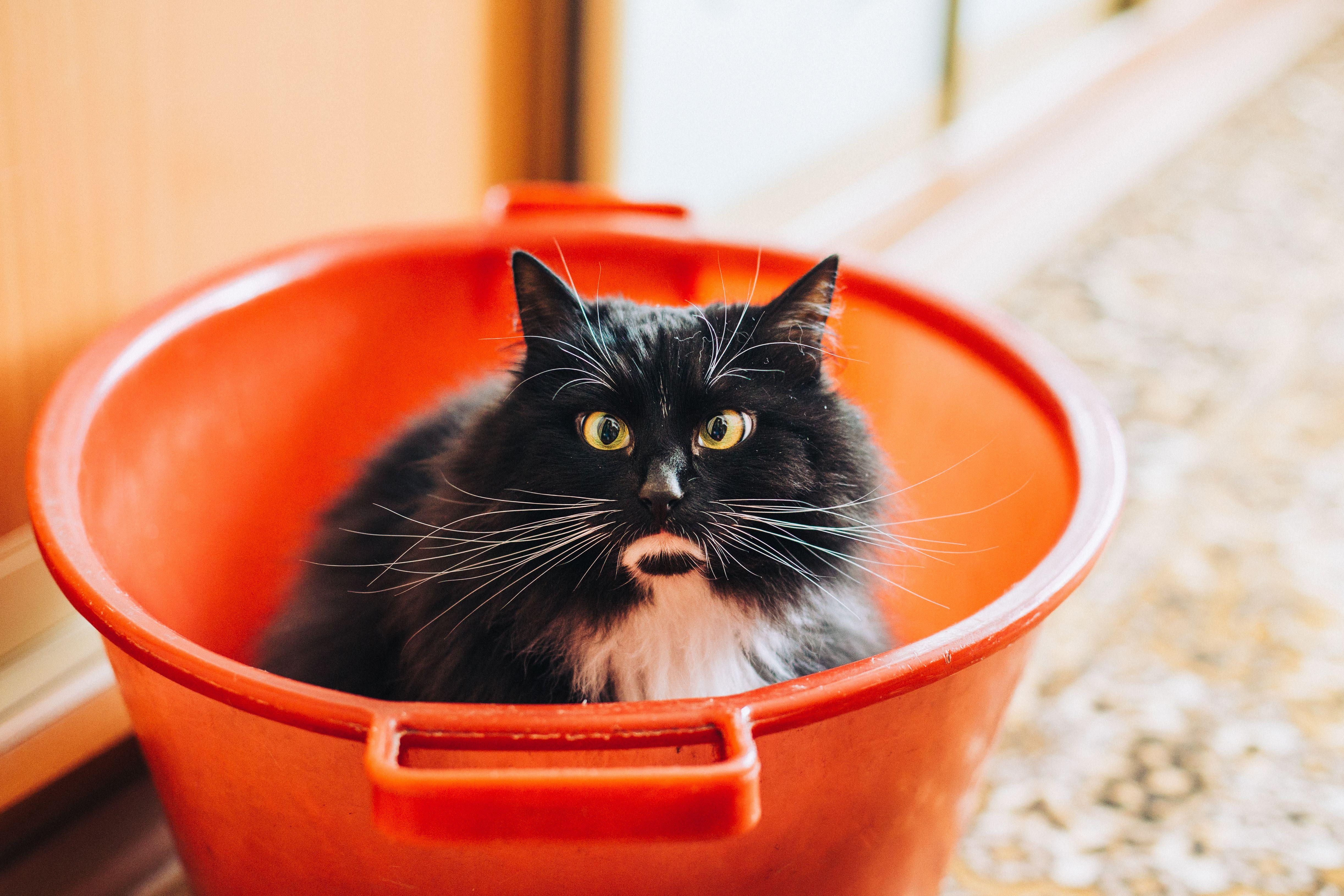 Tuxedo Cat Inside Bucket Pet Insurance Cost Pet Insurance