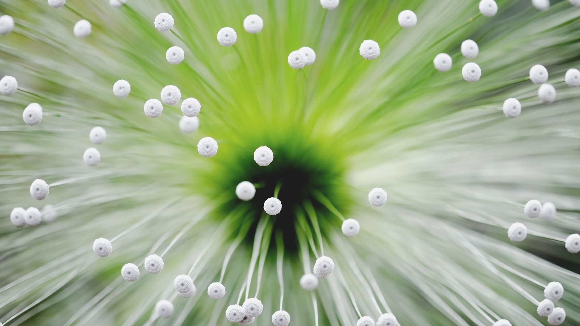 light, flower, tendrils - http://www.wallpapers4u.org/light-flower-tendrils/