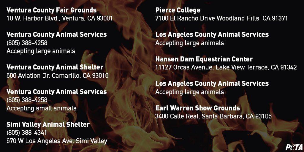 PETA Turkeys are killed at 6mo, don\u0027t eat babies on THANKSGIVING
