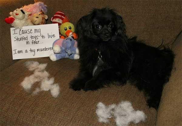 Humorgasms Pet Shaming 24 Pics Animal Shaming Dog Shaming Funny Dog Shaming