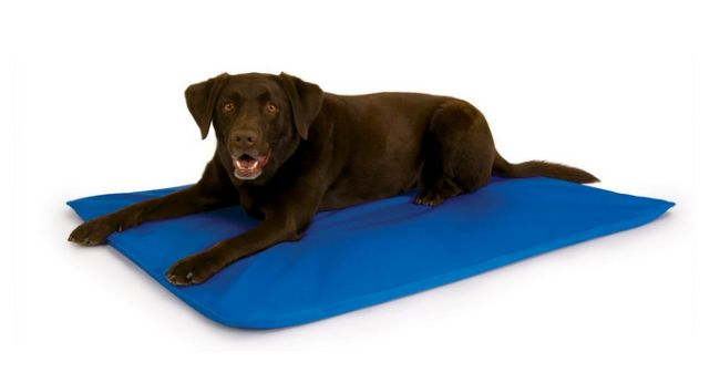 9 Geeky Gadgets For Techie Pup Parents Cool Dog Beds Orthopedic Dog Bed Blue Dog Bed
