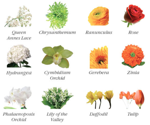 meaning of flowers for valentine's day