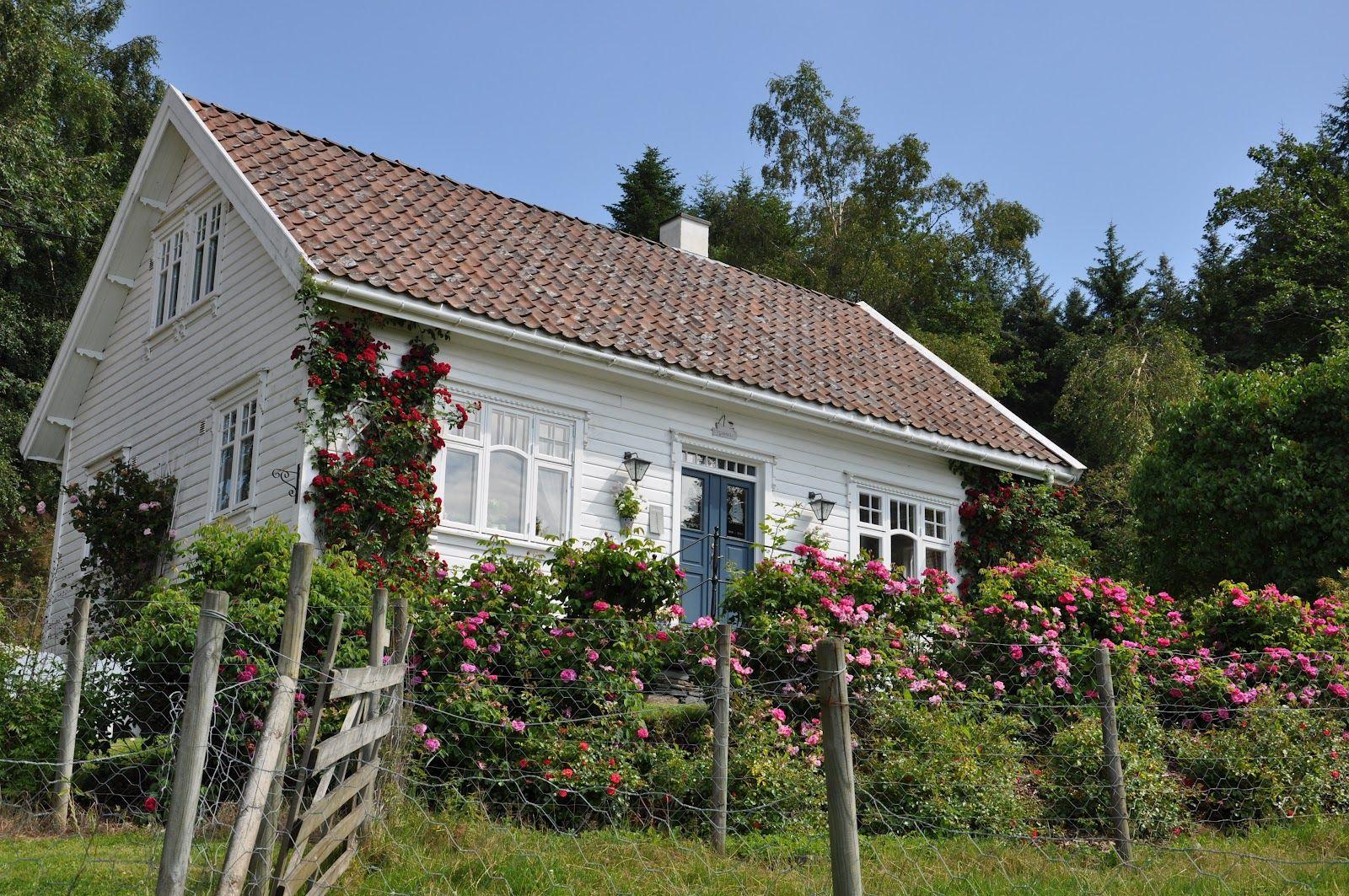 Husmannsplassen i Hidlesundet: Rosehekken