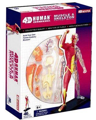 BOHS Human Body Skeleton Anatomy Skull Manikin Heart Anatomy