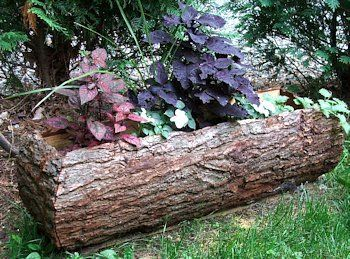 Lovely Diy Planter Of Bark Slabs From Felled Trees Wood Flower Box Wood Planters Garden Containers