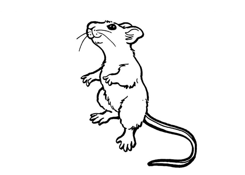 Free Printable Rat Coloring Pages For Kids Animal Coloring Pages Coloring Pages For Kids Cartoon Rat