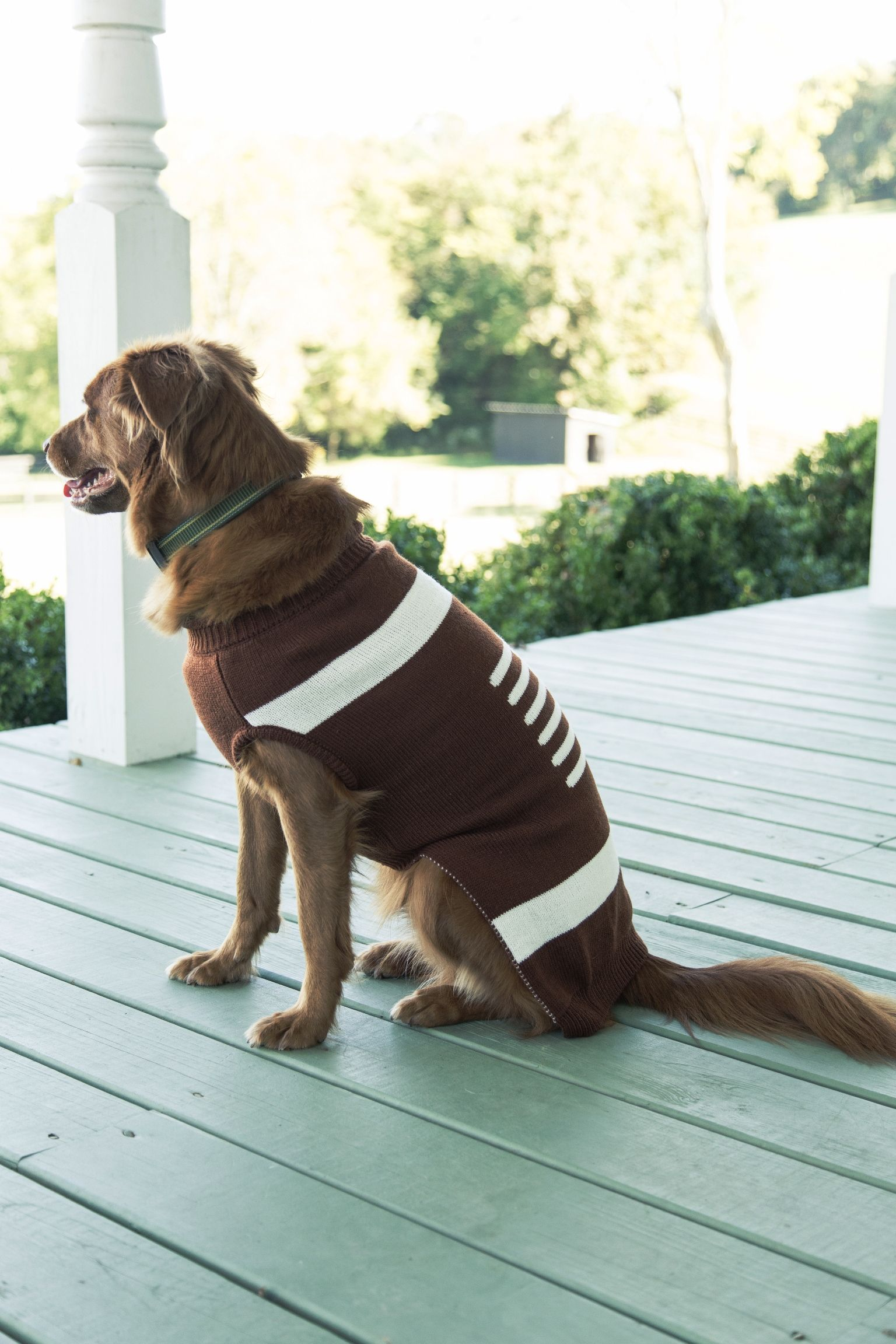 Tailgate time for the dogs! Adorable football sweater ...