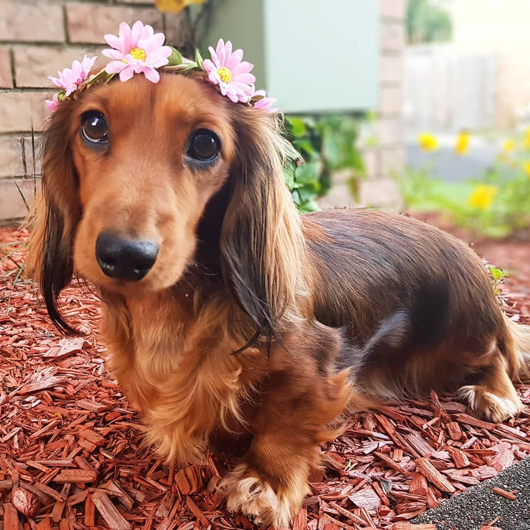 Because Every Girl Deserves A Crown Even If It S A Flower Crown