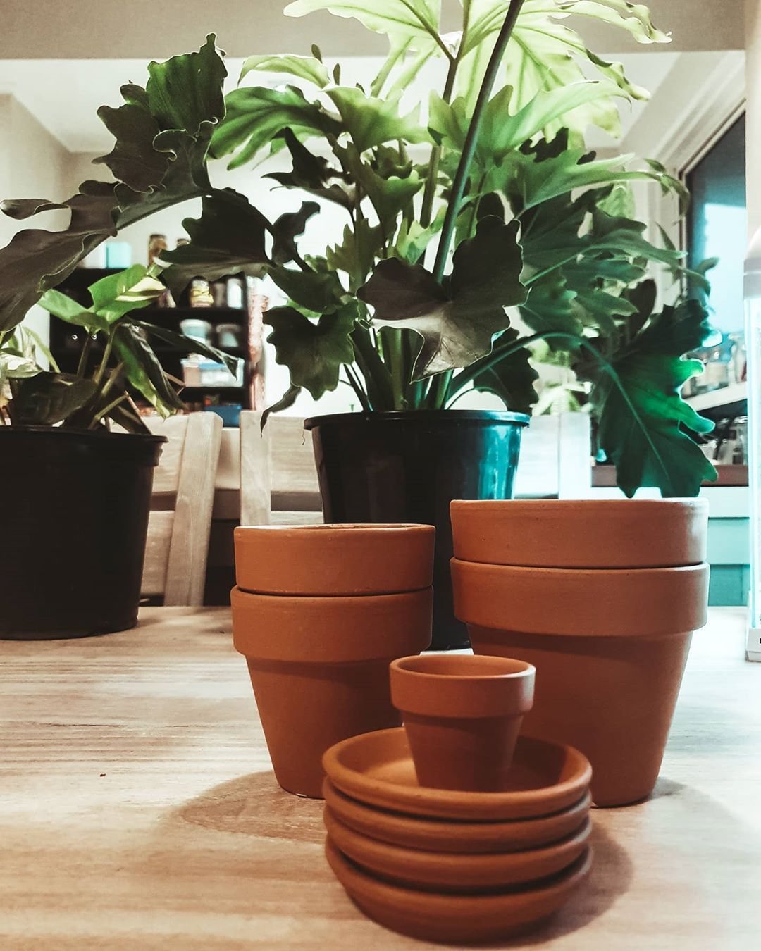 how awesome are terracotta pots though? and cheap  really really cheap. planets are so expensive these days 🌿 🌿 anyone know of any good nz small businesses that make plantsers? i really want to help out where I can and would love some different kind of styles 🌿 🌿 🌿 🌿 #terracotta #terracottapots #plant #plants #nature #plantsofinstagram #green #photography #plantsmakepeoplehappy #gardening #naturephotography #plantlover #houseplants #love #urbanjungle #art #plantlife #indoorplants #photooft