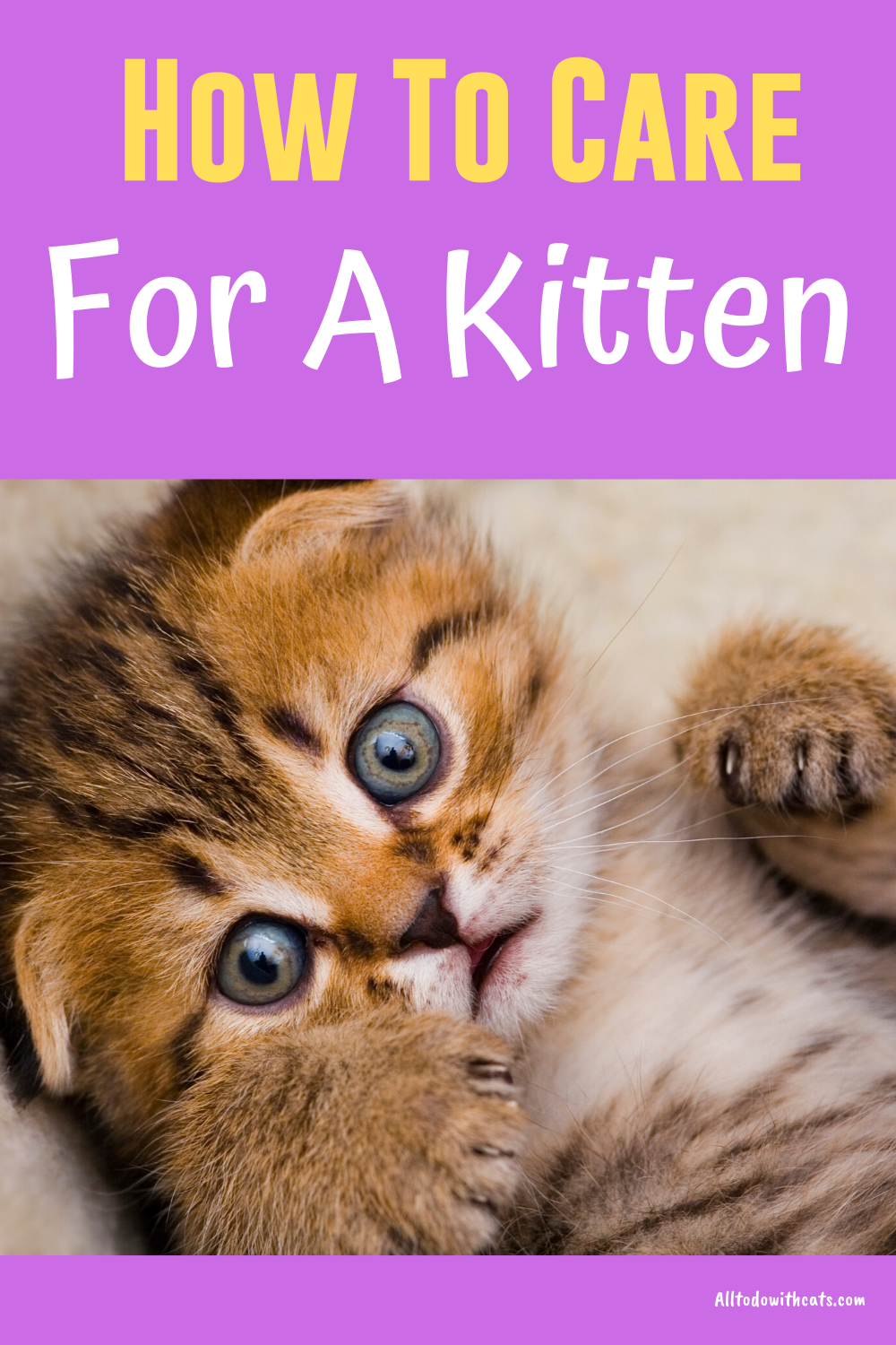Kitten Chart Newborns To 8 Weeks Kitten Care Newborn Kitten Care Baby Kittens