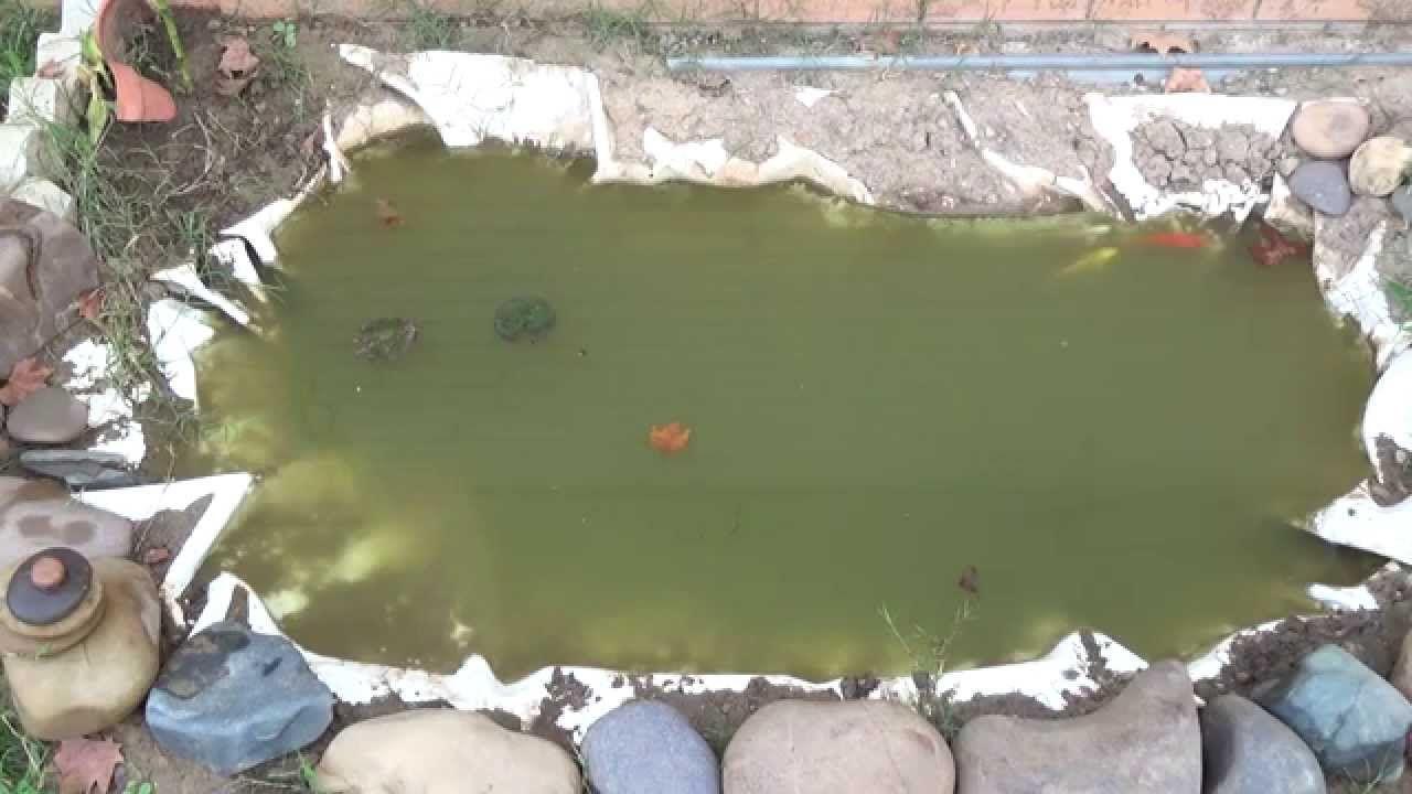 Realizaci n de mi estanque con peces koi shubunkin y for Plantas para estanque peces koi