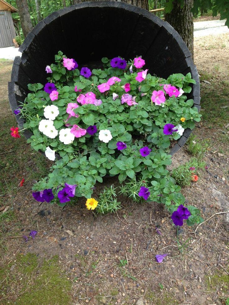 barrel with flowers Whiskey barrel spilled flowers SPILLING