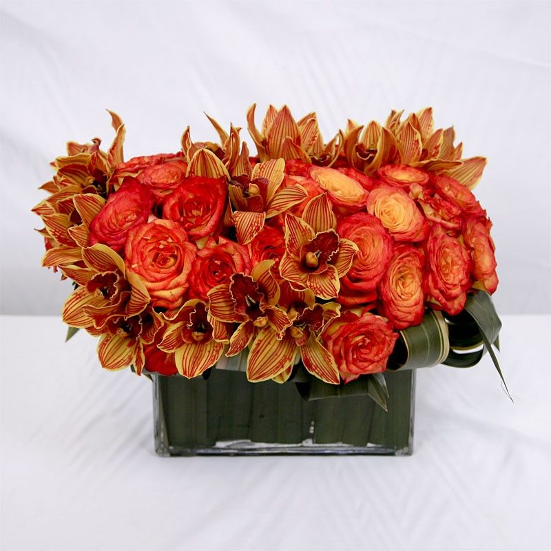 Cymbidium Orange Available From South Africa June Nov Afg