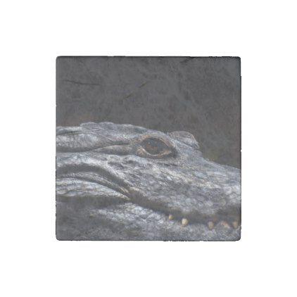 Crocodile Alligator Reptile Scary Animal Aquarium Stone Magnet